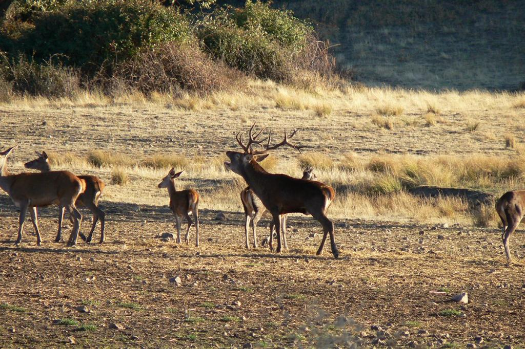Discover the secrets of the red deer rut