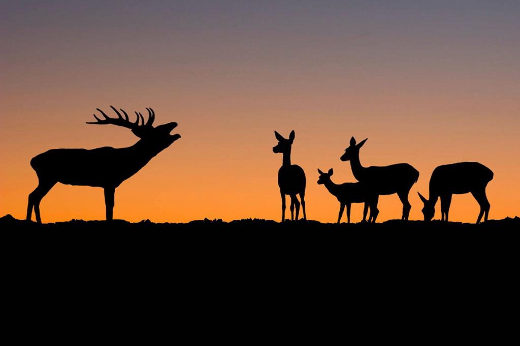 Discover the secrets of the red deer rut 2019